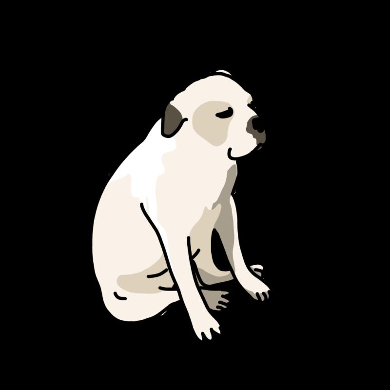 一息つく犬ホワイト