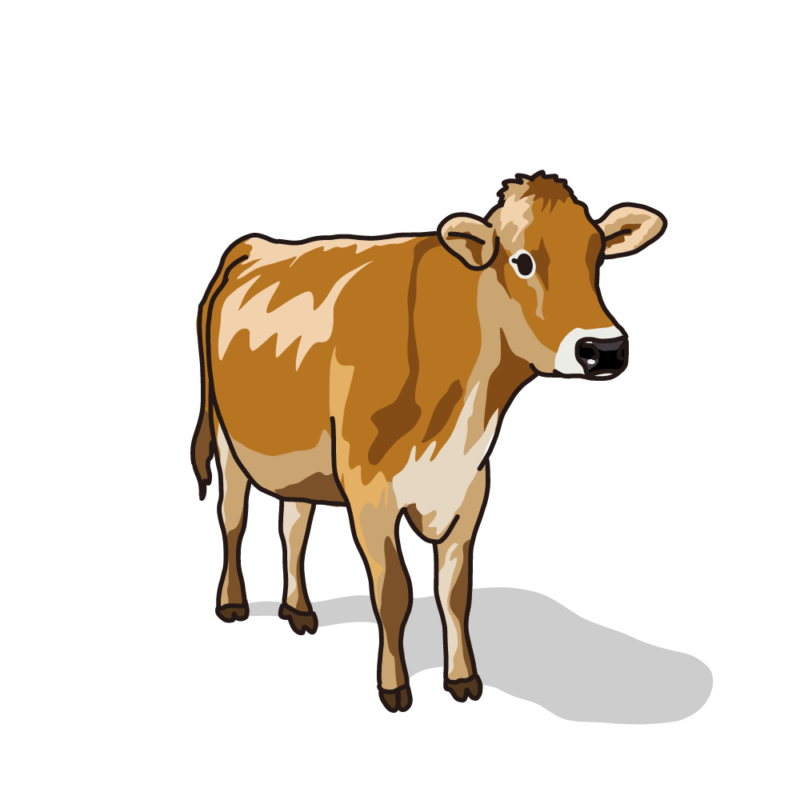 ジャージー牛ノーマル
