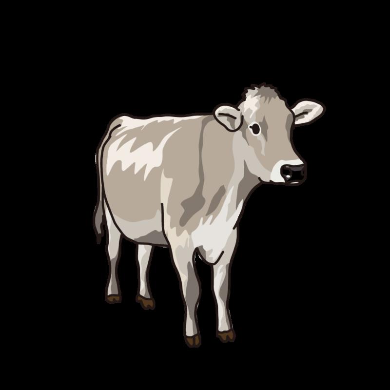 ジャージー牛シルバー