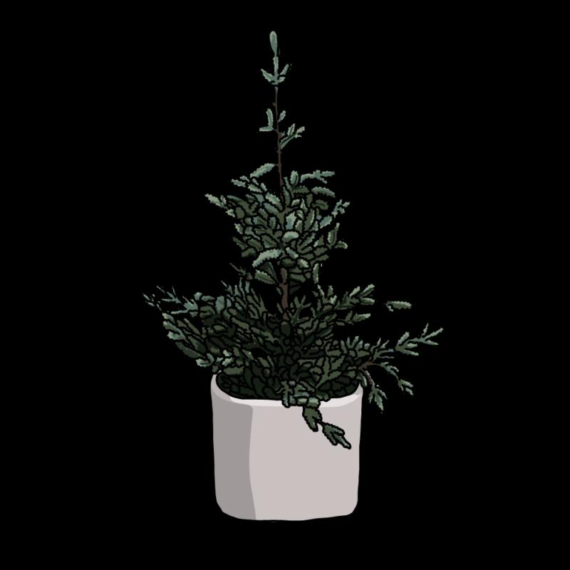 もみの木(飾りつけ前クリスマス)ホワイト