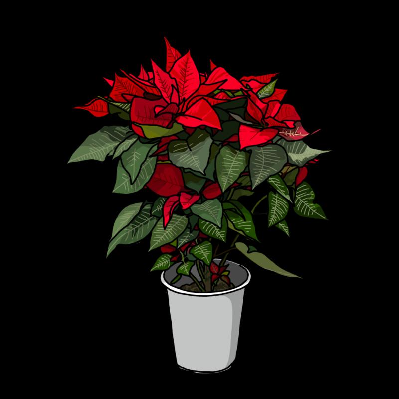 ポインセチアの鉢のイラスト赤