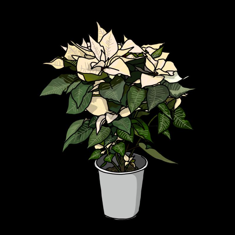 ポインセチアの鉢のイラストホワイト
