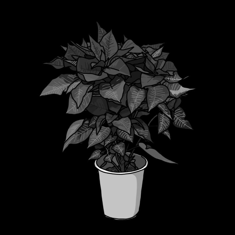 ポインセチアの鉢のイラストモノクロ