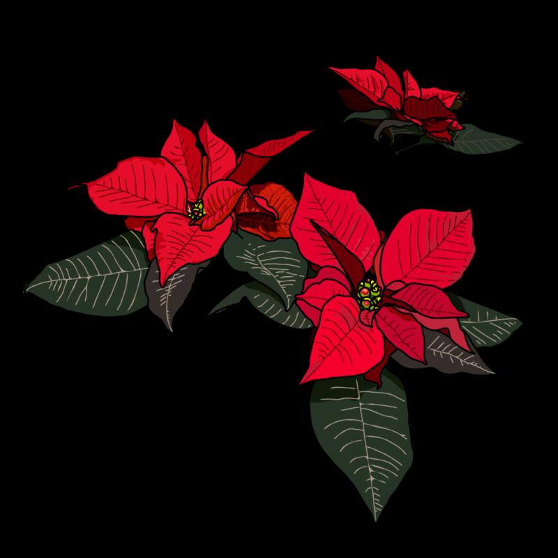 ポインセチア(バラ)赤
