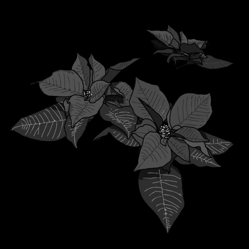 ポインセチア(バラ)モノクロ
