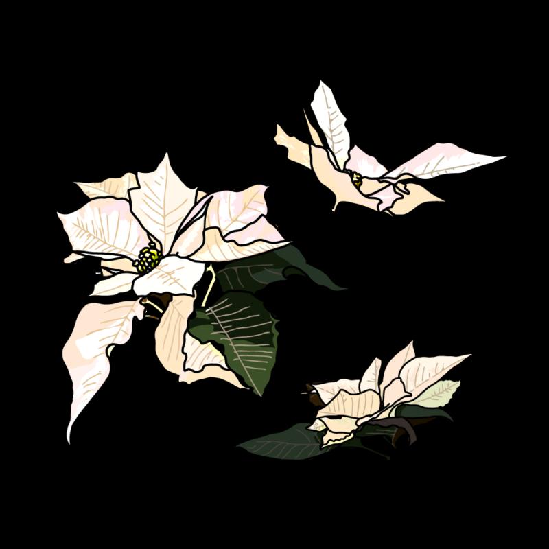 ポインセチア(バラ3つ)ホワイト