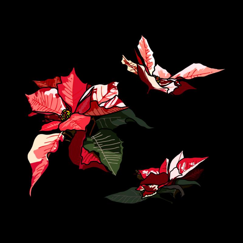 ポインセチア(バラ3つ)マーブル