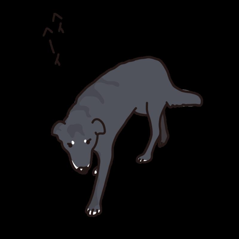 見回り中の犬黒