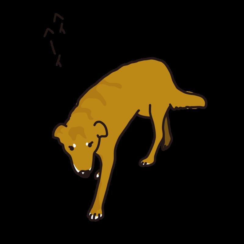見回り中の犬赤
