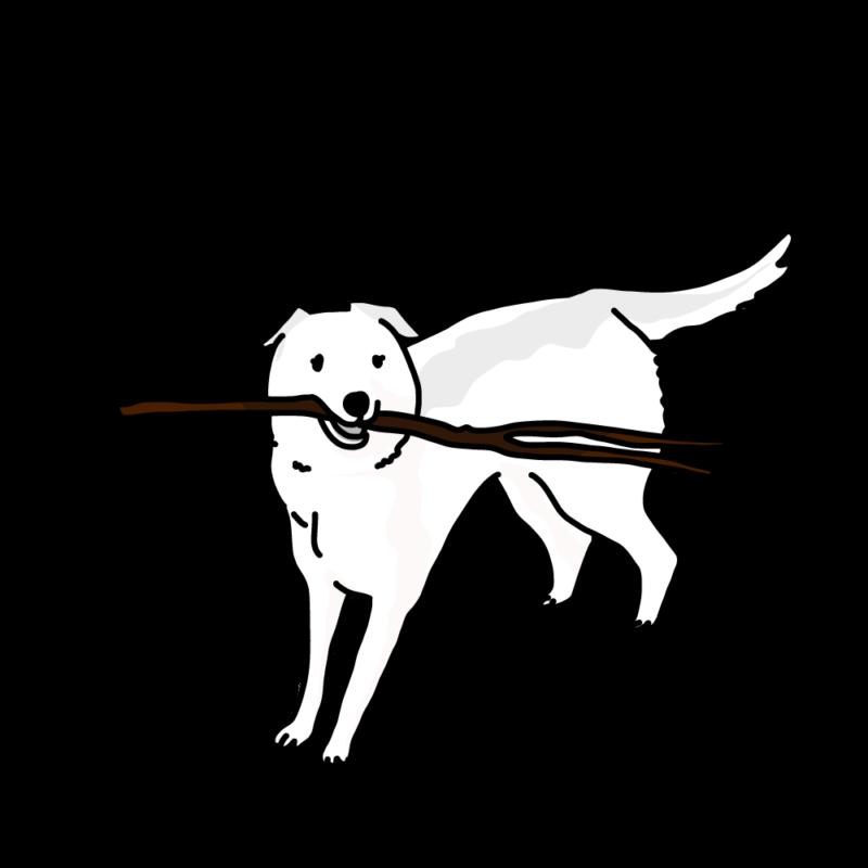 棒っ切れを持っている犬白