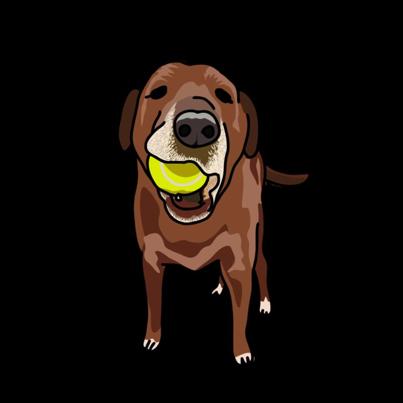 ボールで遊びたい犬赤