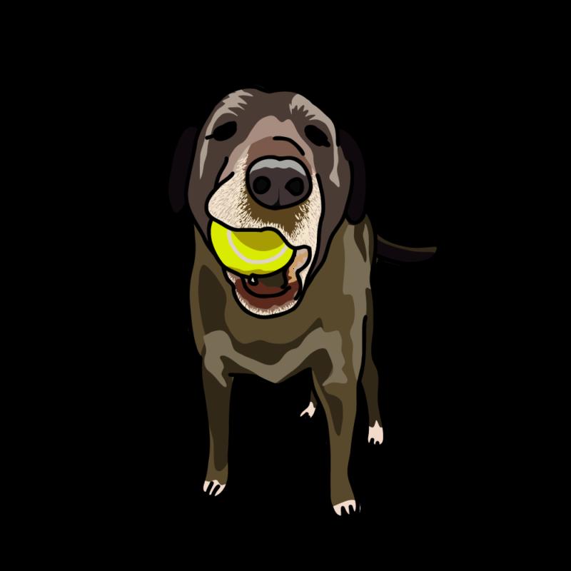 ボールで遊びたい犬黒