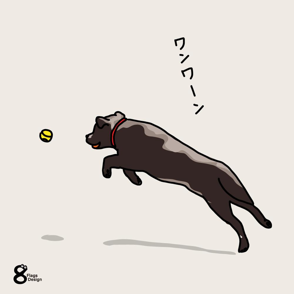 ボール遊びする犬のキャッチ画像