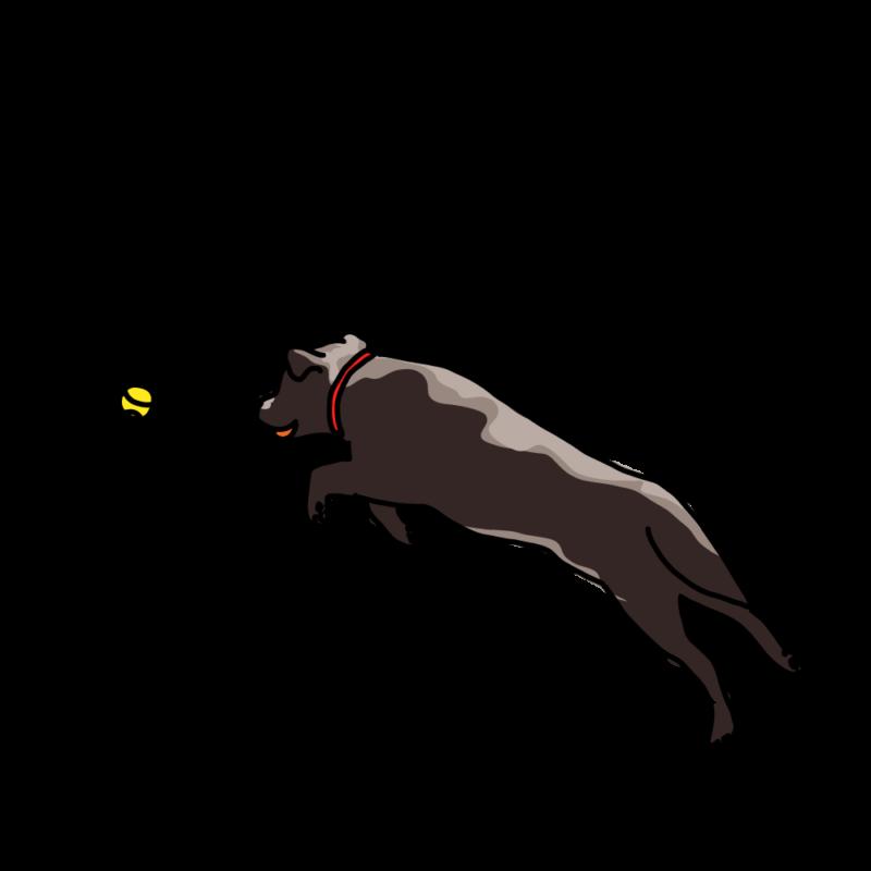 ボール遊びする犬黒