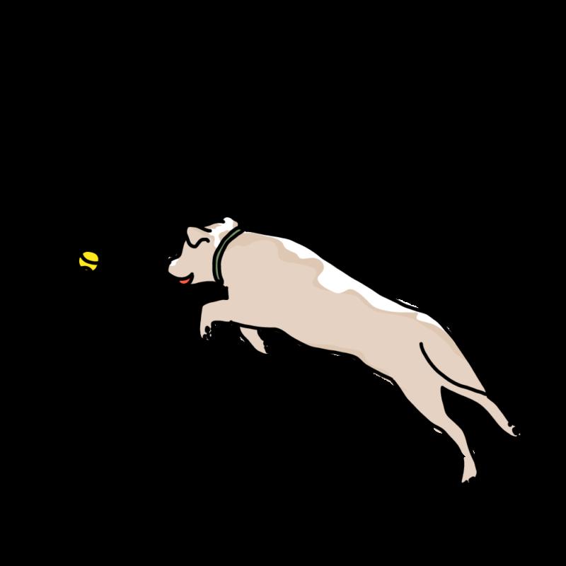 ボール遊びする犬クリーム