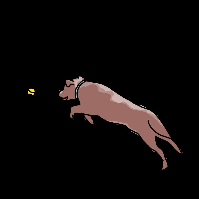 ボール遊びする犬赤