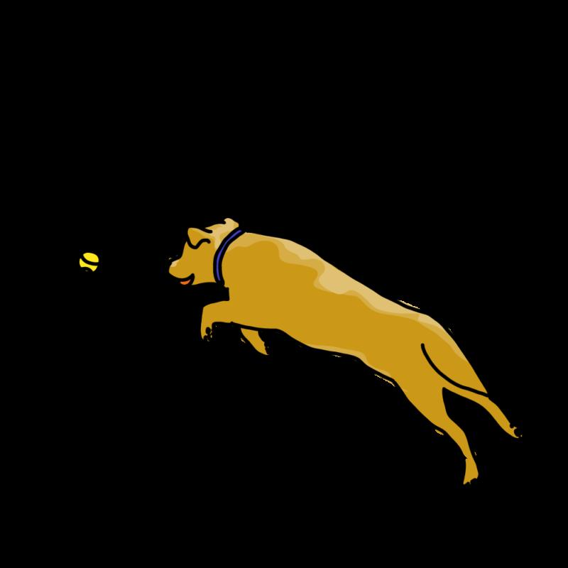 ボール遊びする犬茶