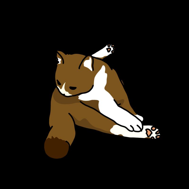 巾着座りのネコ茶