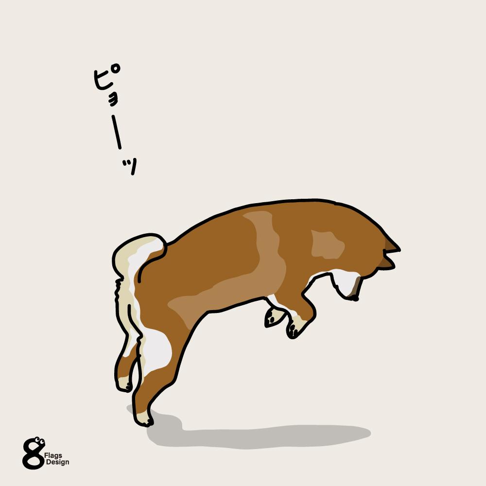 ジャンプする柴犬のキャッチ画像