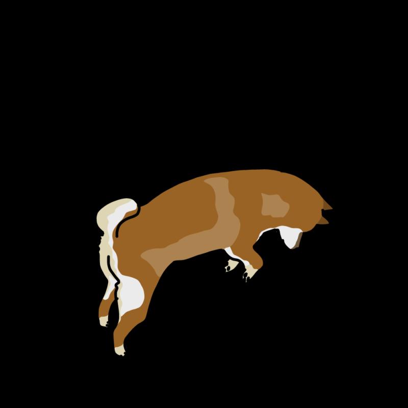 ジャンプする柴犬赤柴