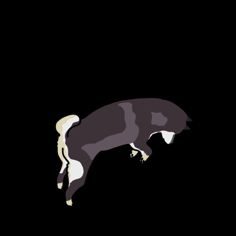 ジャンプする柴犬黒柴