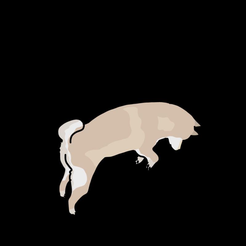 ジャンプする柴犬クリーム