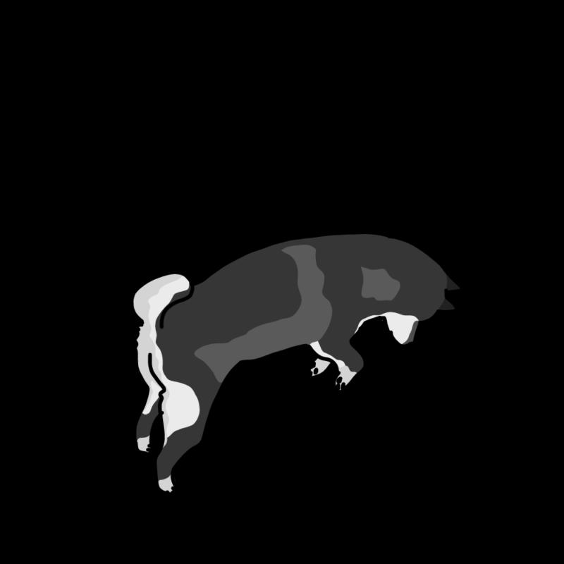 ジャンプする柴犬モノクロ