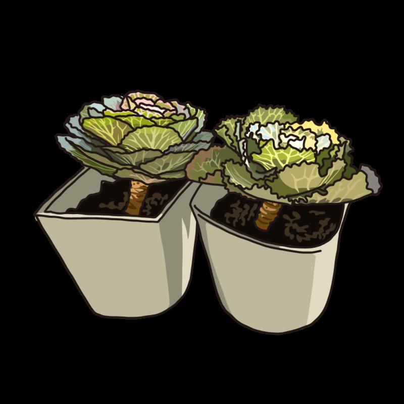 葉ボタングリーン
