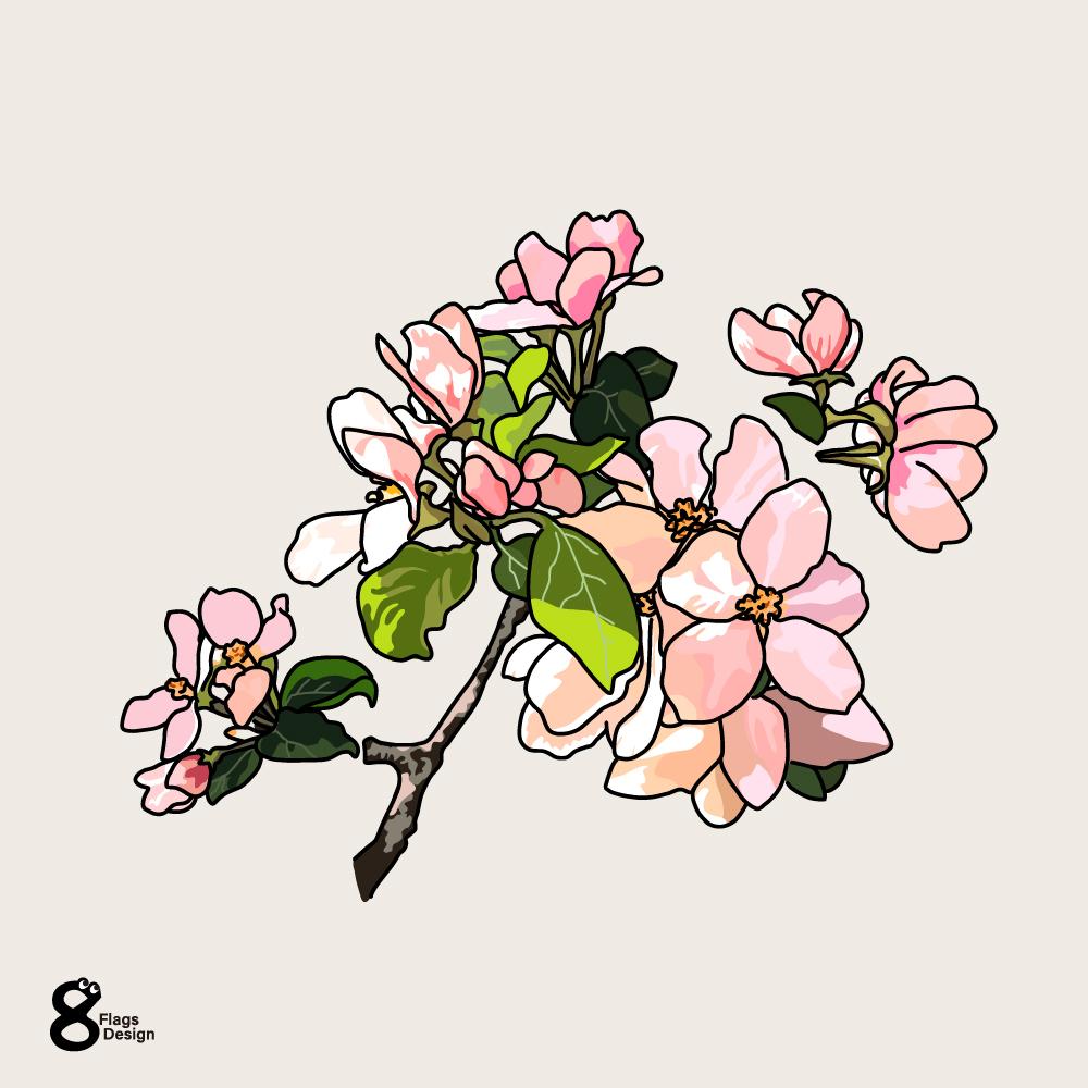 リンゴの花のキャッチ画像