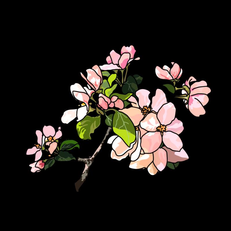 リンゴの花ピンク