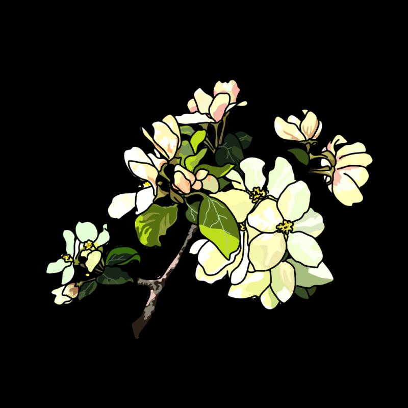 リンゴの花イエロー