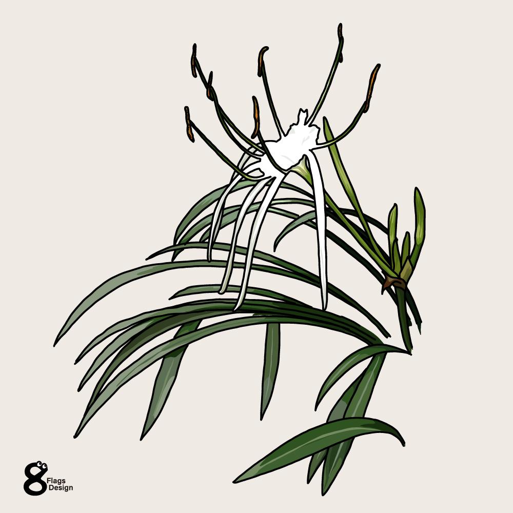 バリ島の花のキャッチ画像