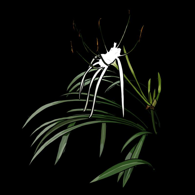 バリ島の花白