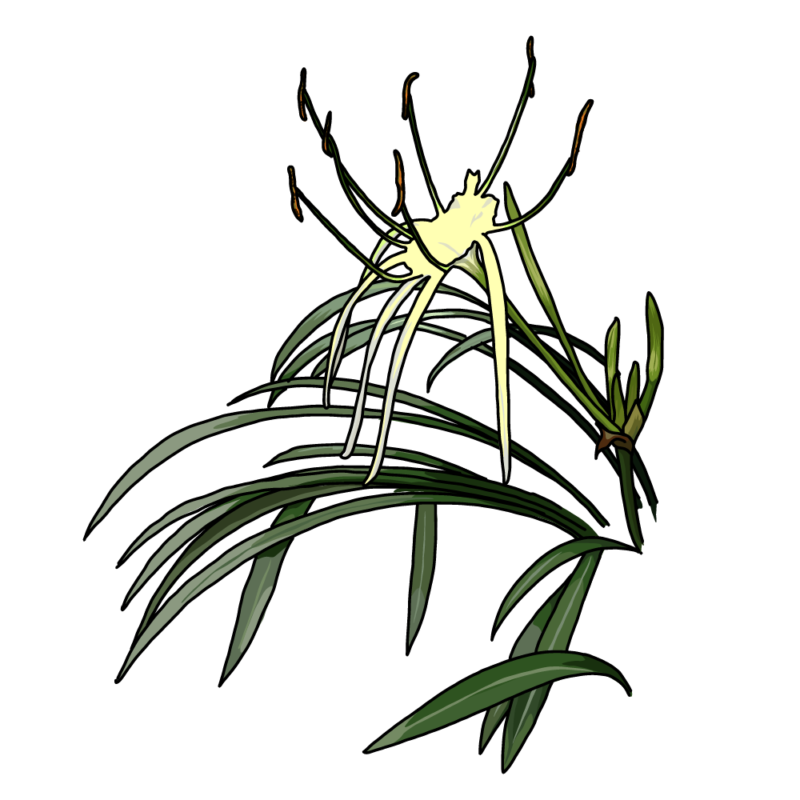 バリ島の花イエロー