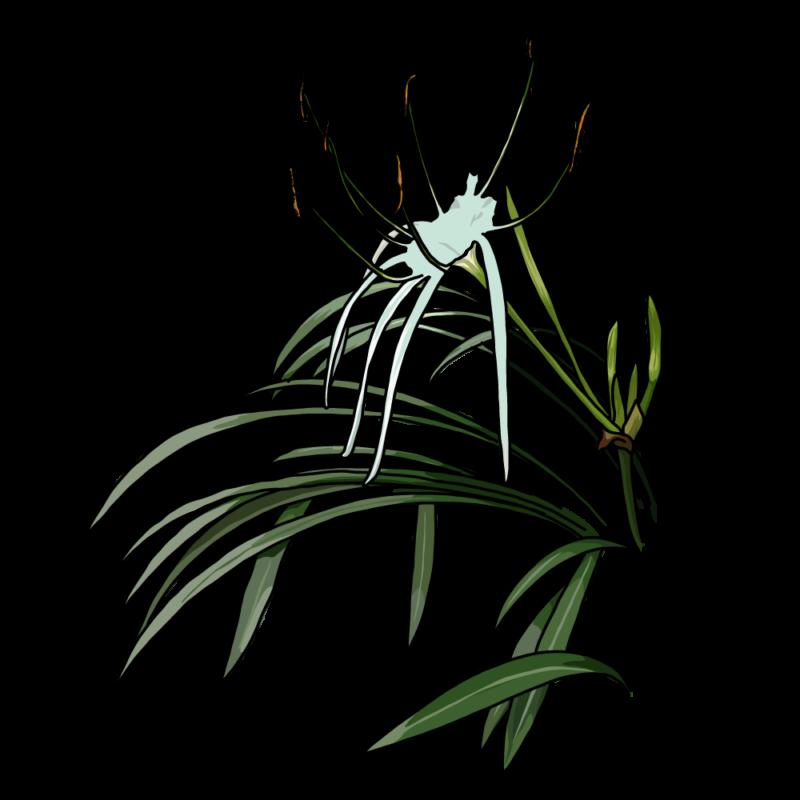 バリ島の花青