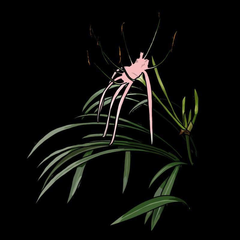 バリ島の花ピンク