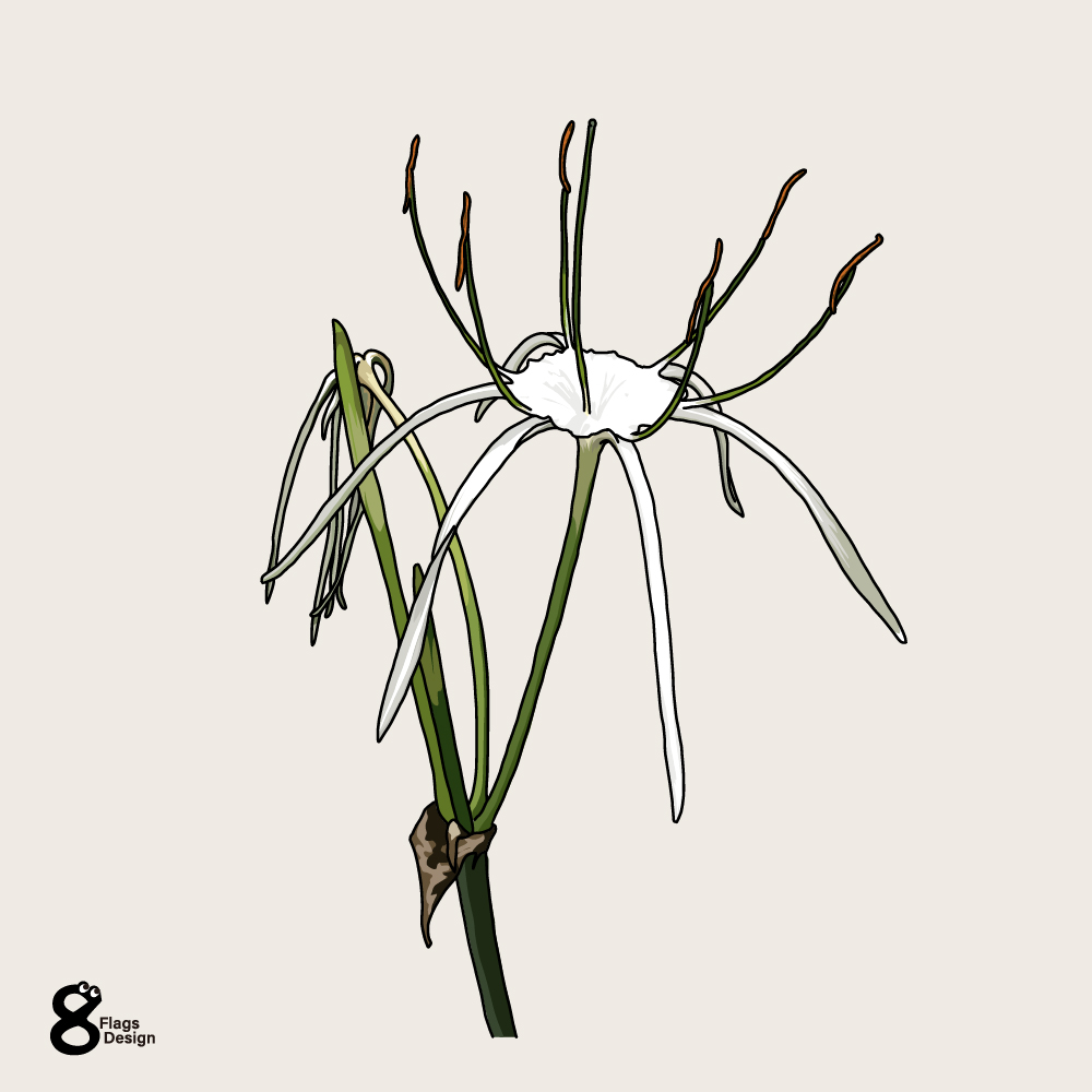 バリ島の花2のキャッチ画像