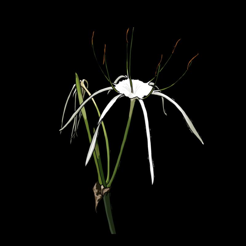 バリ島の花2白