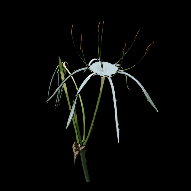バリ島の花2青