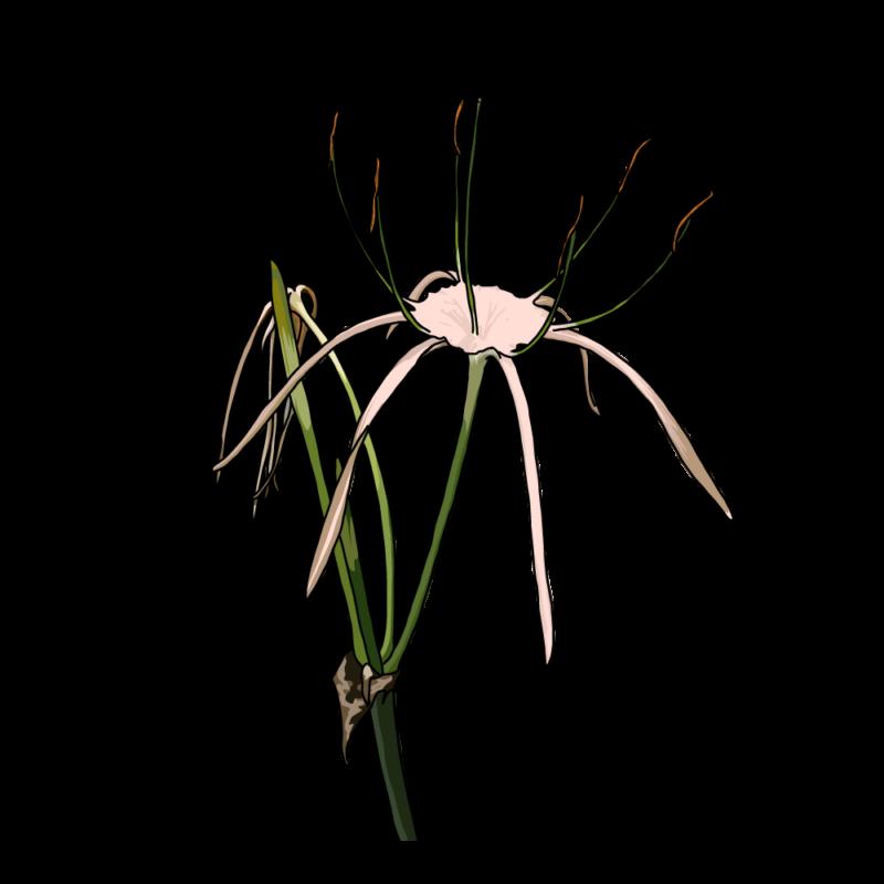 バリ島の花2ピンク