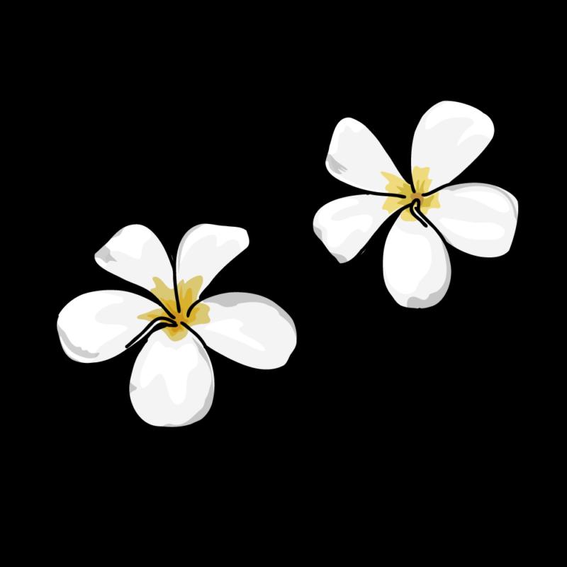 プルメリア白