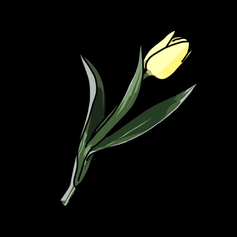 チューリップ黄色