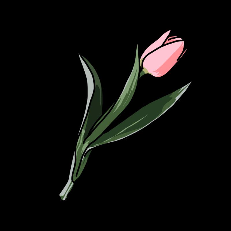 チューリップピンク