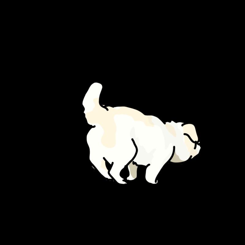 小走りするムク犬白