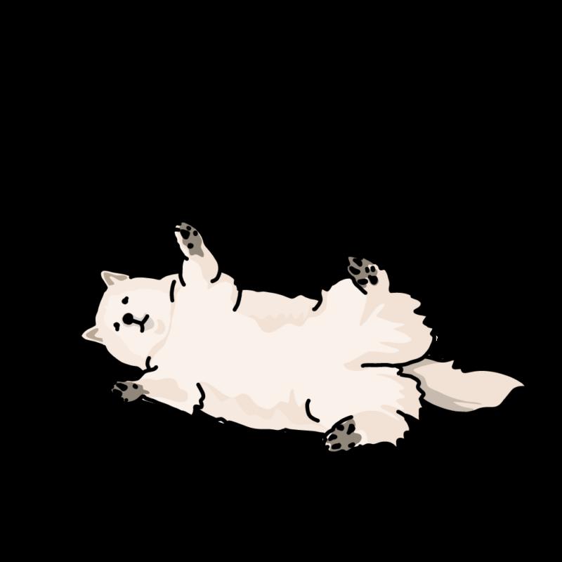 ばんざいハスキー犬白