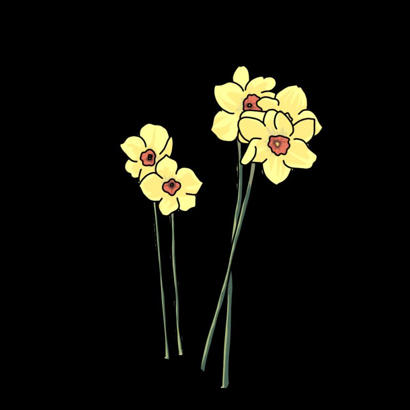 水仙のバラ黄色