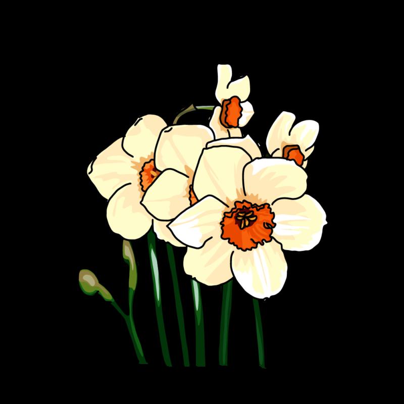 水仙(ナルキッソス)黄色