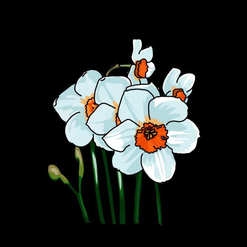 水仙(ナルキッソス)ブルー