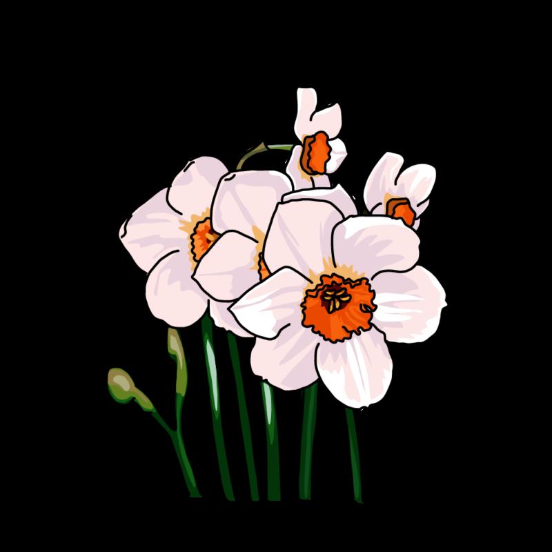 水仙(ナルキッソス)ピンク
