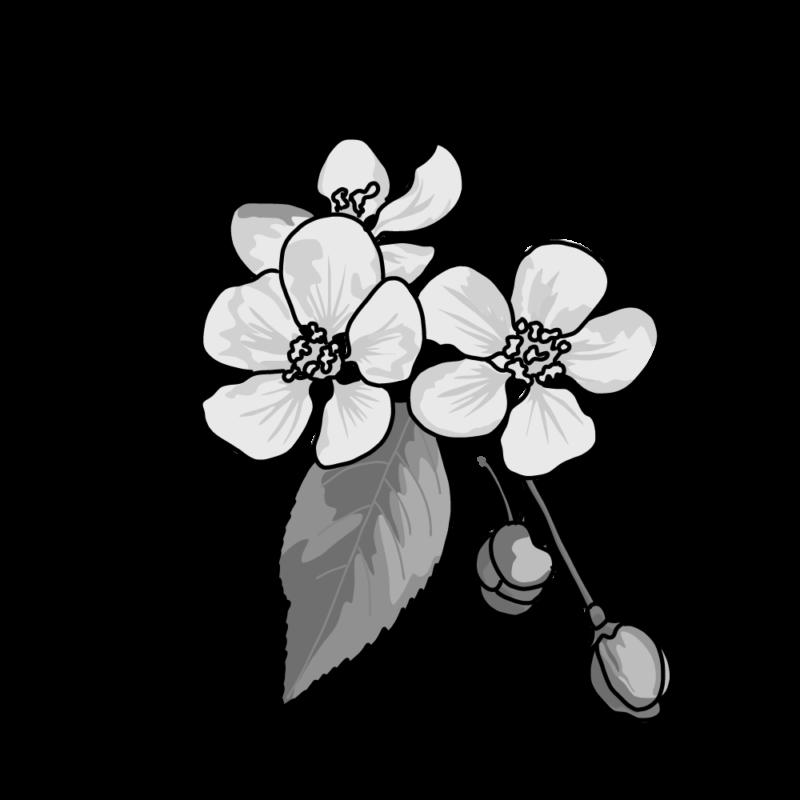 桜モノクロ
